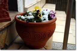 植木鉢も寒そう…