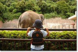 こちらは,金沢自然公園の「ぞうふぁんと」