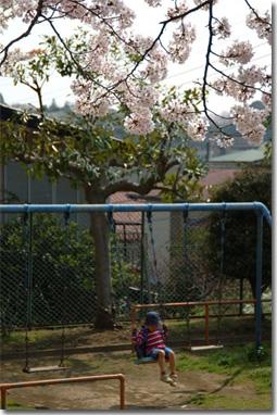 桜フォトアルバムへ