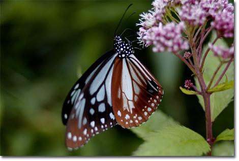 蝶を真横から。