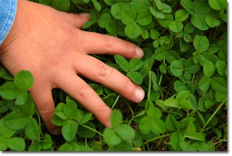 近所の公園にて。カズボンの手とクローバー。