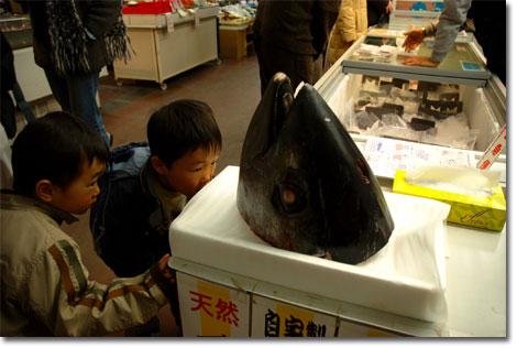 「顔だけ魚」 三崎にて