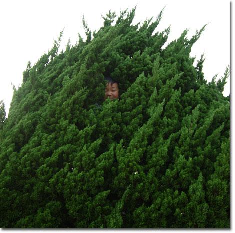 反対側にはユウキチ。もう,木の一部である・・・。