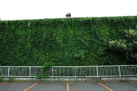緑色の滝。もはや木造と言ってもいいような気がする・・・。