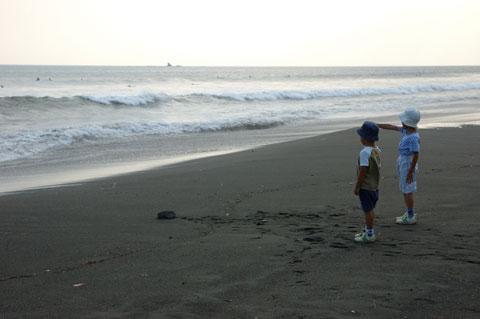 今日は波が高く,チビ達は大波からギリギリで逃げる遊びをしています。