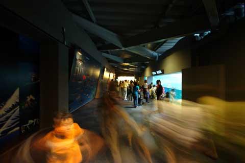 新江ノ島水族館で回転するユウキチ君。