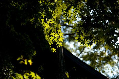 これは鎌倉宮。紅葉はまだまだ先のようです(^^)