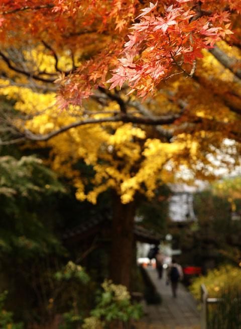 安国論寺の紅葉。あまり有名ではないみたいですが,心休まる落ち着いた紅葉でした。