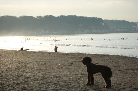 由比ヶ浜でご来光を拝む犬。犬なりに,なにか心にジーンと来るのかな?