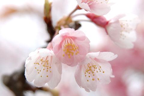 近づけば,一応,春っぽくなるような気がしないでもない・・・。