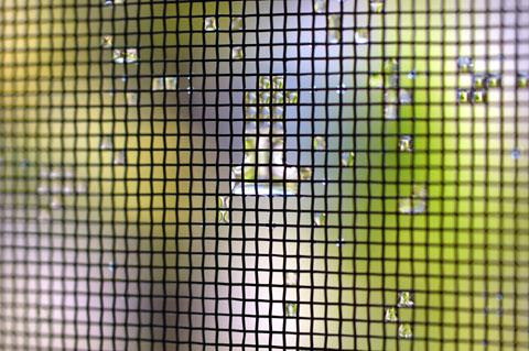 網戸についた水滴を撮る。しかし,細かい色はよくわからない(涙)