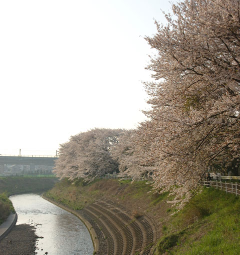 小さい桜トンネルですが,ご近所の方の憩いの場になっています(^^)