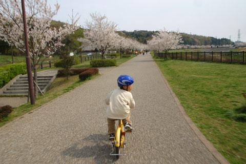 お,桜に興味が? でも,よそ見運転はいけませんよ~