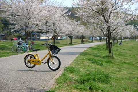 桜並木と,カズボンの無変速,無印良品号。