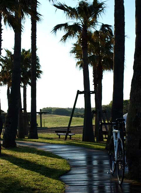 まずは,辻堂海浜公園から。昨夜の雨で緑がキレイです。