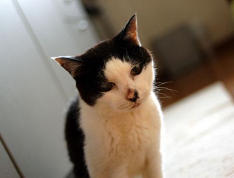 久しぶりに会うことができた「コロ」おばあちゃん。御年21才の長寿猫です。