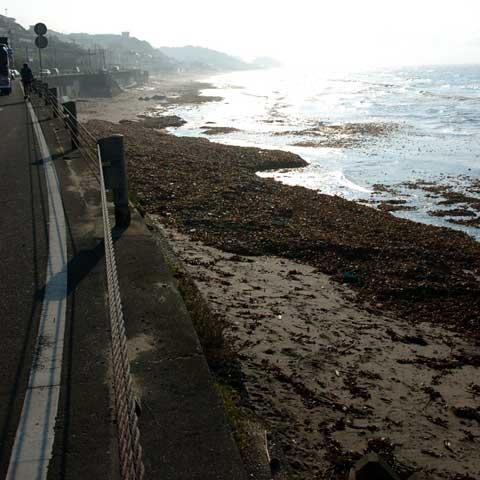 うんぎゃ~ 砂浜が海草で真っ黒に~! 鎌倉高校前付近。