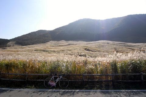 仙石原のススキ野原。初めて秋に見ることができました。すごい~!