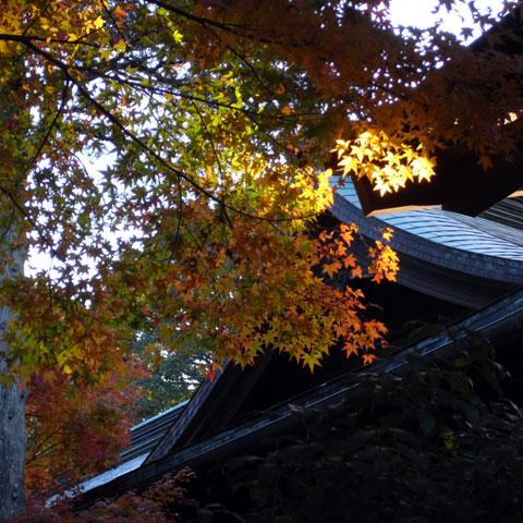 鎌倉宮のモミジ。ちょうど日が差してきました(^^)