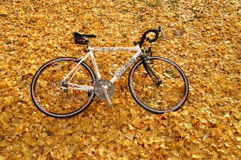 黄色い絨毯に横たわる白い自転車。