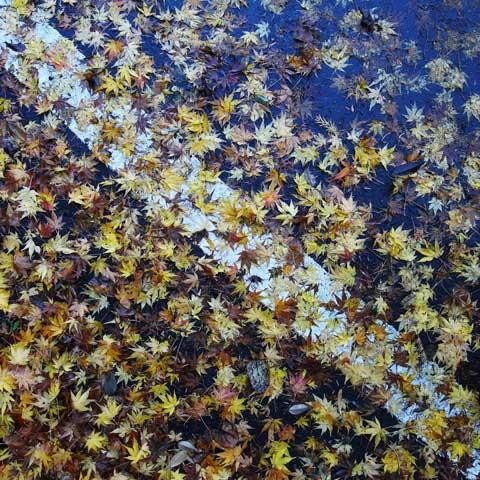 鎌倉山の上り坂。前夜の雨に濡れる落ち葉達。