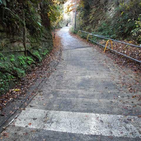 路面が濡れている上に落ち葉が張り付いていて,グリップ力は0に近いのです(困)