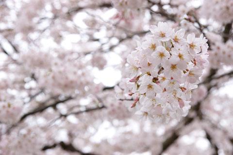 花びら一つ一つがとても綺麗。
