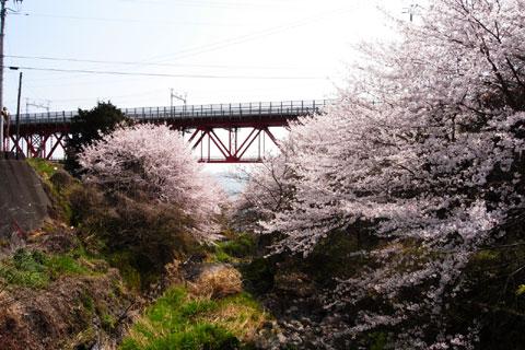 こちらは綺麗な桜と鉄橋。すぐ前は海です。