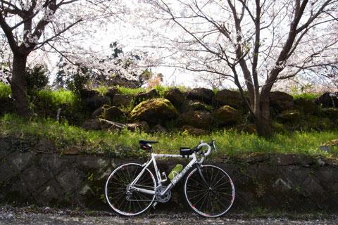 桜の下の小さな石垣。ここに座ってのんびり桜を海を眺めていました。