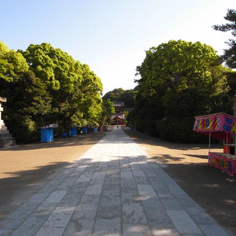 桜の季節が終わると,新緑の季節がやってきます。朝の八幡宮も緑がきれい。