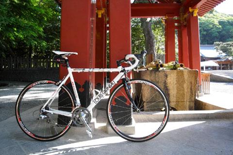 優しい朝日の光が差し込む鶴岡八幡宮。静かです(^^)