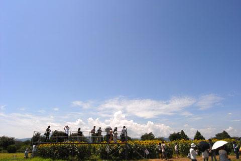 北側の畑には足場が組まれています。もうちょっと引いて撮ったら面白い写真だったかもなぁ……。