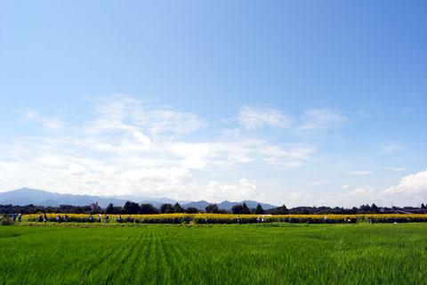 遠~く方に黄色い帯が! あれがひまわり畑では!?