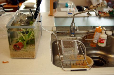 水換えやゴミ捨てなど,流しが近いと便利だったりします。