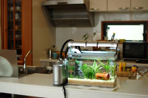 次は熱帯魚(金魚も)。最初はキッチンに住んでいました。