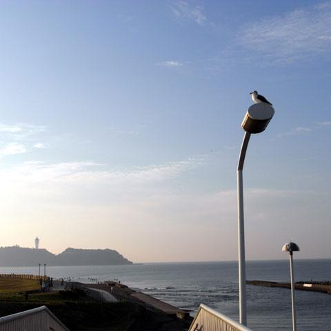 鵠沼橋の近くにある歩道橋。江ノ島も富士山も見える,鳥もくつろぐオススメスポットです。