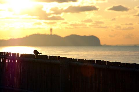 よ,ようやく新しいサーバーで再スタート。これは数年前の江ノ島初日の出写真。あんまり関係ないけど......。