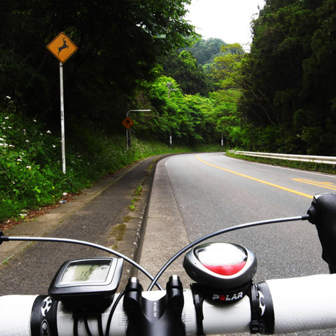 路肩に微妙な段差,鹿の飛び出し,スリップ注意。世界は危険でいっぱいだ・・・。