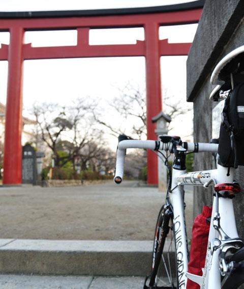 河津桜は満開ですが,段葛のソメイヨシノはまだまだです。