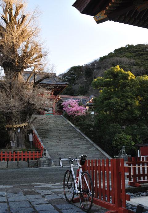 河津桜は,大階段の右端に咲いています。手前の超カッコイイ自転車はRHC号。