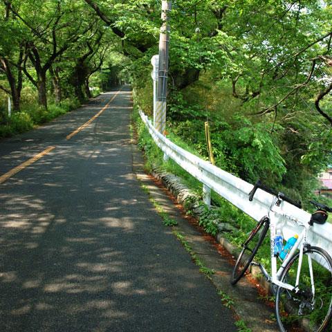こんな坂(湘南平)を見るとゾクゾクしちゃいます。やはりマゾか?