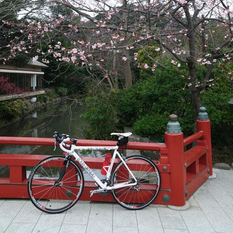 八幡宮で一休み(ドラ休み)。今月末は段葛の桜も見られるかな?