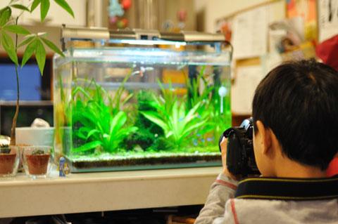 熱帯魚を撮るカズボンを撮る。できれば水槽の掃除を手伝って欲しいが・・・。