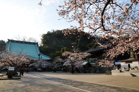 境内には至る所に桜(と,我らカメラマン・・・)が。