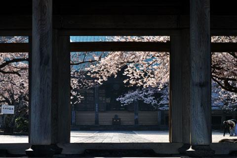 こちら,材木座の光明寺。山門の向こうが眩しい。