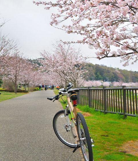 日曜日は,家族で引地川親水公園や大庭城址公園に家族でサイクリングしてきました♪