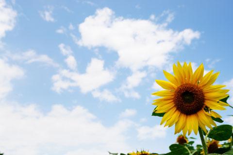 真夏ような(って真夏だよ)天気,暑いのなんのって。