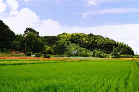 水を採取した田んぼ。改めて田舎ぶりを発見し,うれしくなりました(^^)