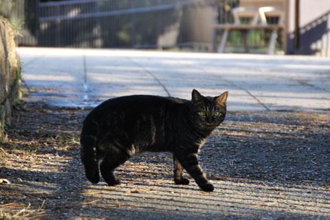 公園内をパトロール中のネコに睨まれる。あ,いや,不審者じゃありません。
