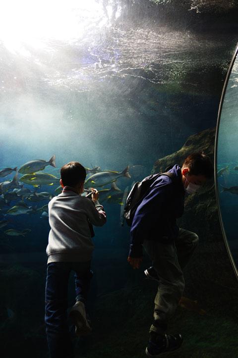チューブ型水槽を上ろうとするユウキチ。群泳する魚を撮ろうとするカズボン。